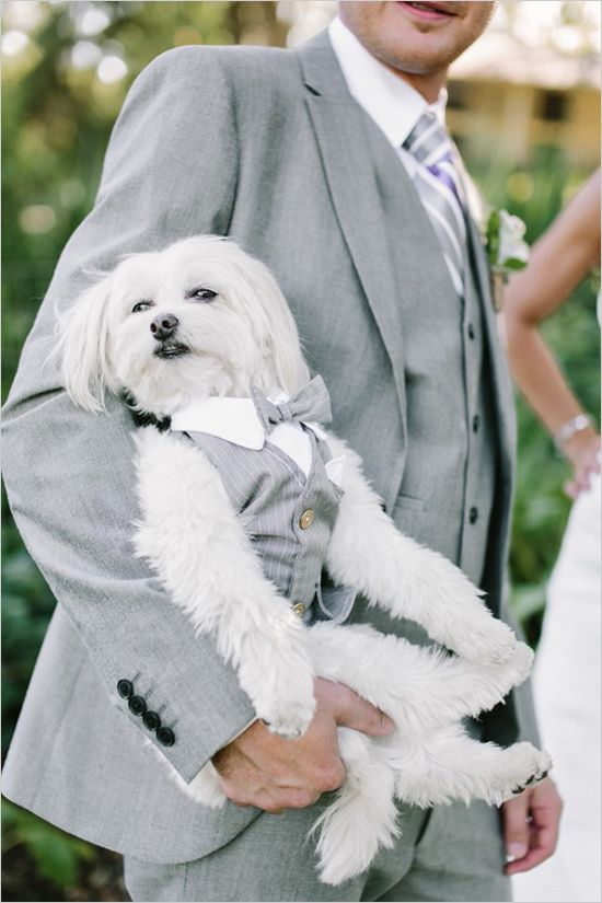 Your Wedding, Your Dog: 5 Dos and 5 Don'ts — thehitchlist