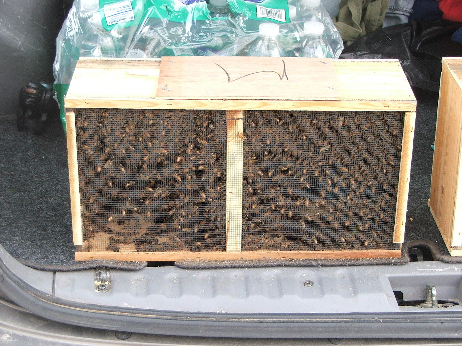 Beecosystem — Package Bees & Getting Started Beekeeping