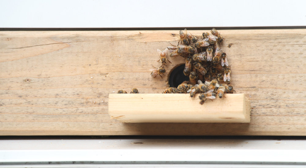 Bees+on+the+windowsill.jpg