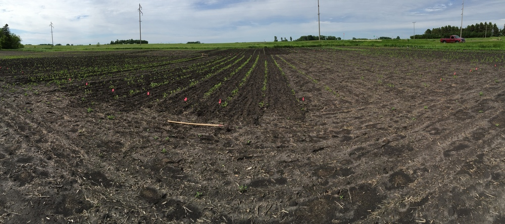 Pano of most of the plot.