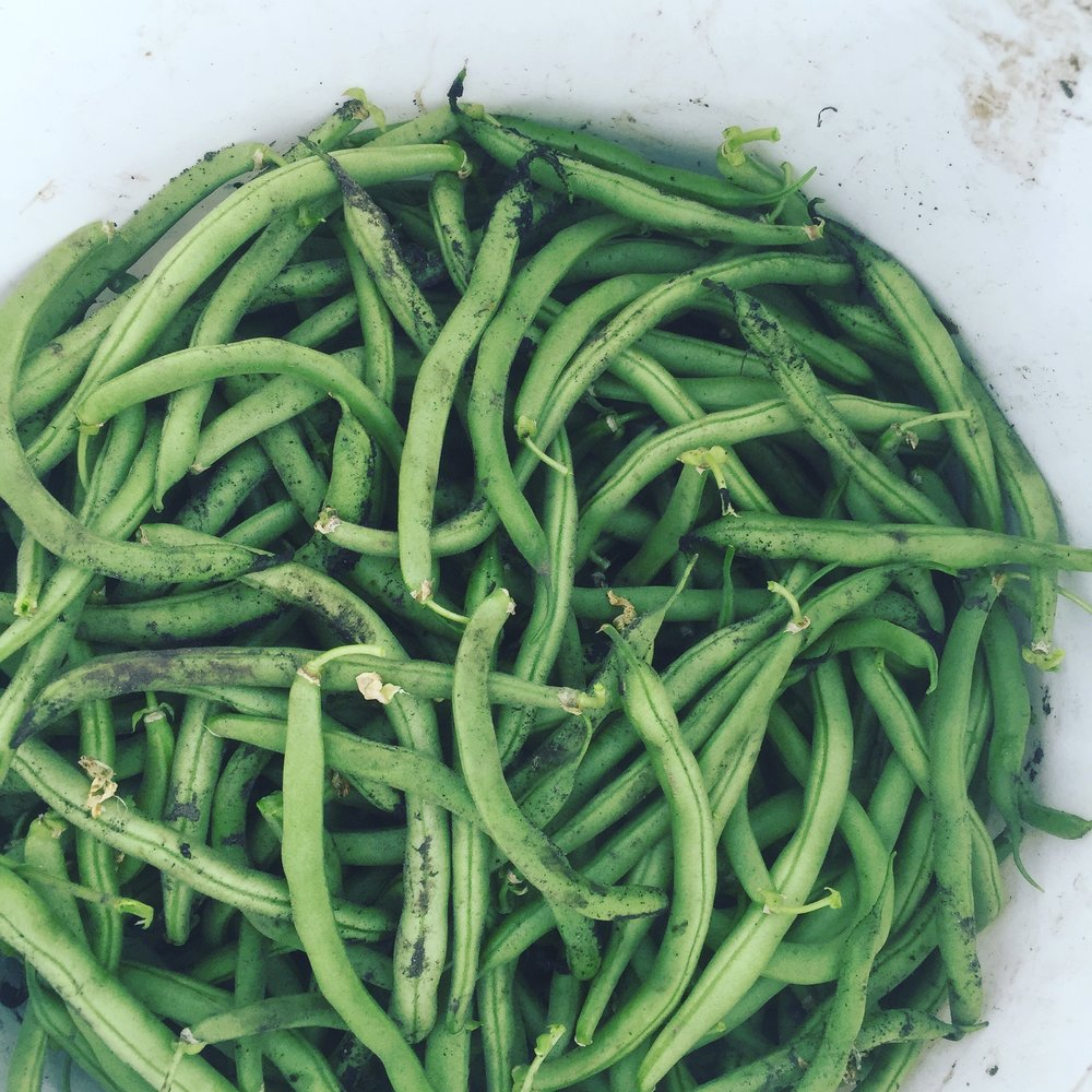 Who doesn't love green bean season?