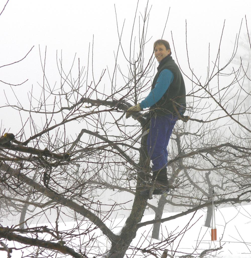 Denis pruning in 2005