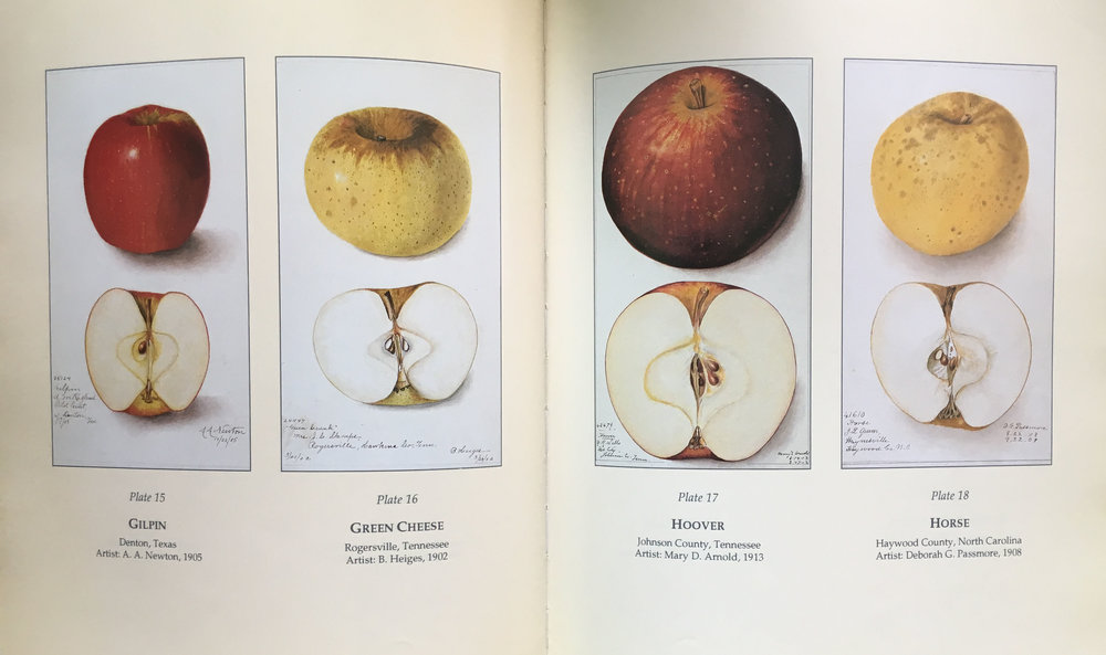 Old Southern Apples, Plates 15 - 18; Photos: Jerry Markatos