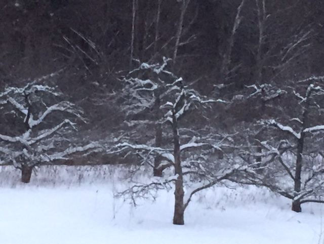 Trees in Winter , Photo: Alan Suprenant
