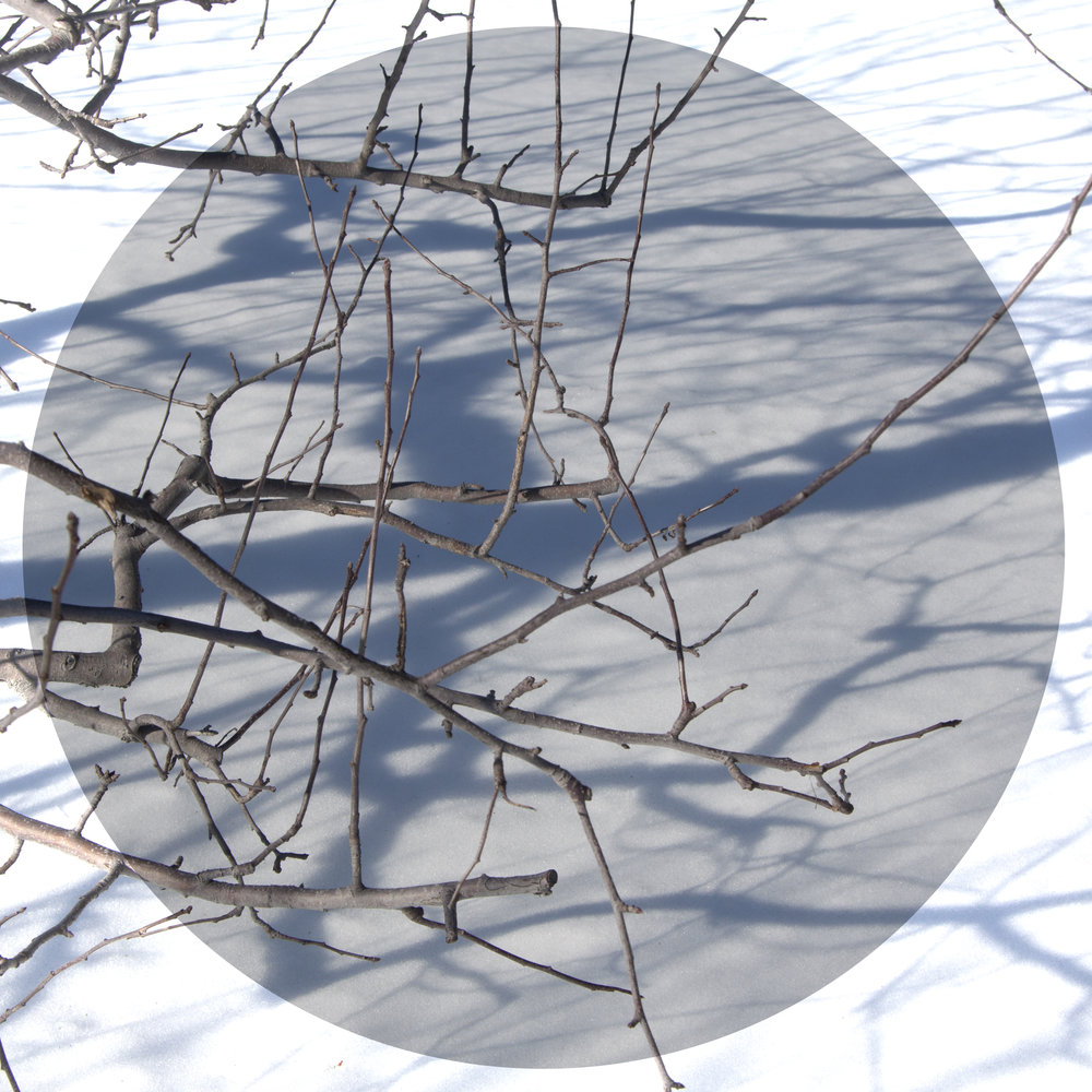 Winter Shadows , Photo:Linda Hoffman
