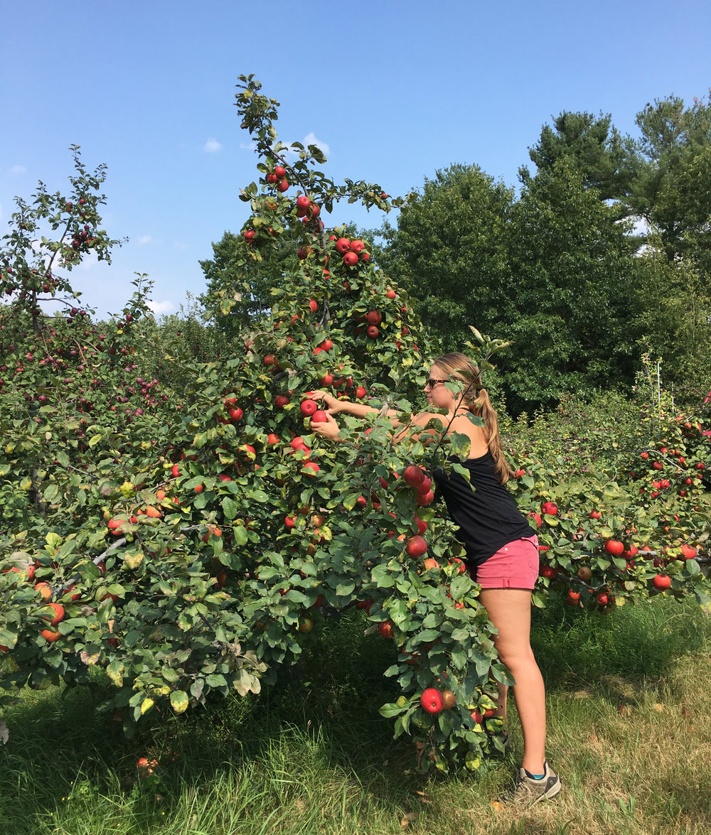 My daughter, Ariel, picking Honey Crisp apples in 2017.
