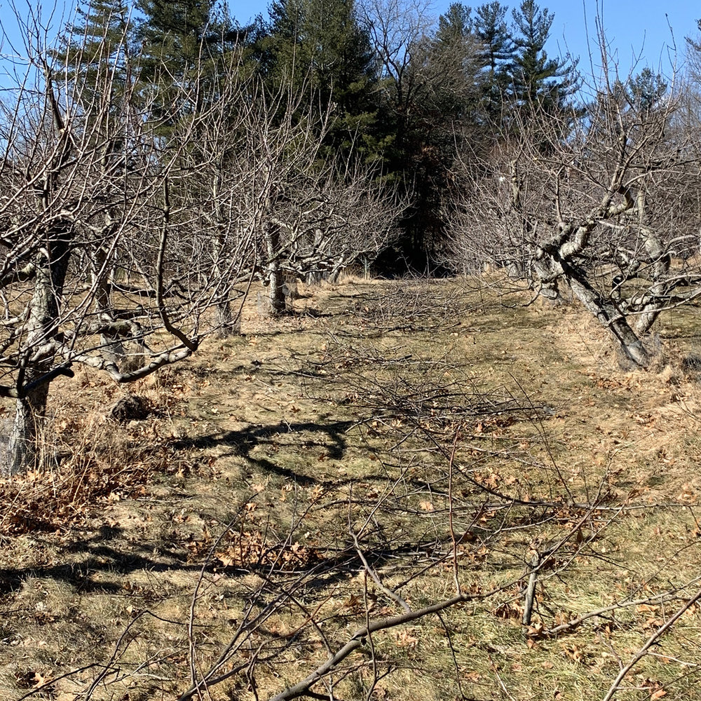 Pruned Row February, 2019