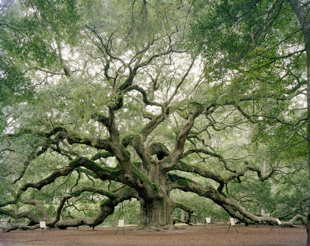 Angel Oak, Johns Island, South Carolina