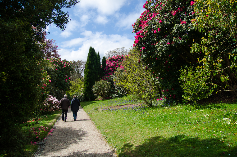 The pathway from the top of Glendurgan with red rhododendrons.