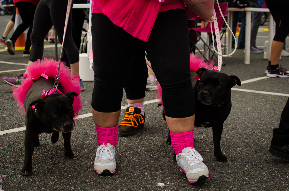 Race for life blog 2015-11.jpg