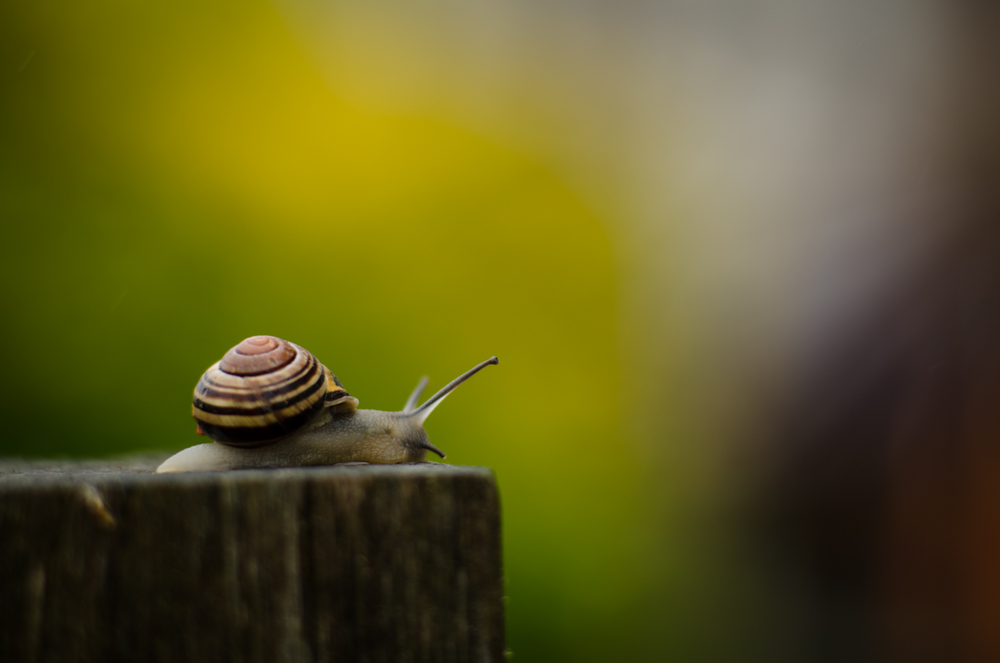 a snail on a fence