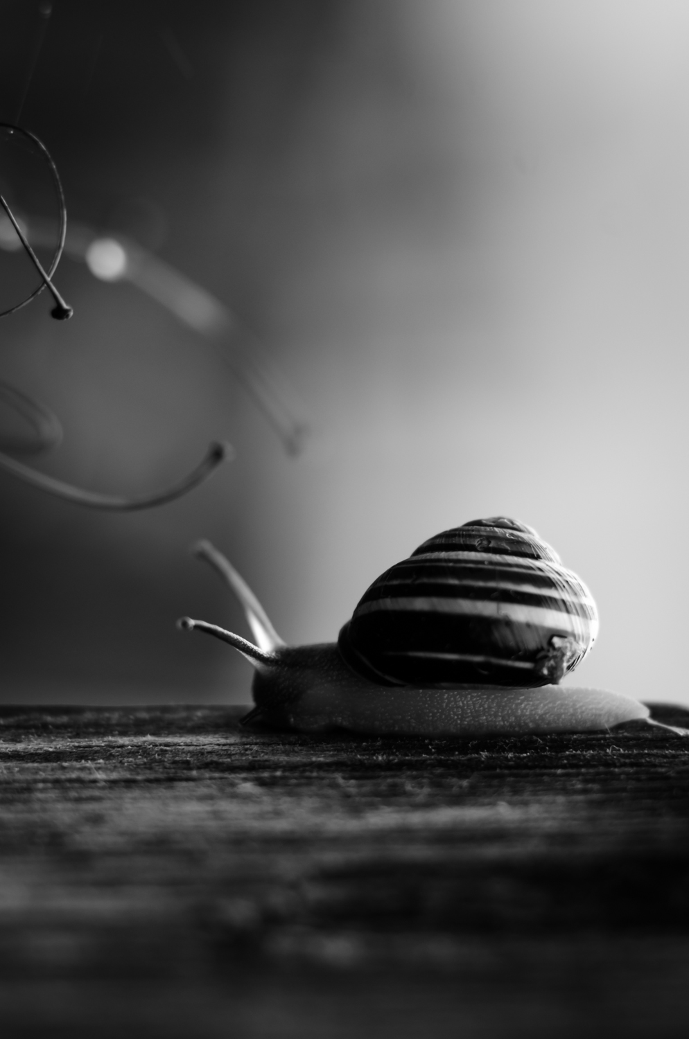 a black and white photo of a snail