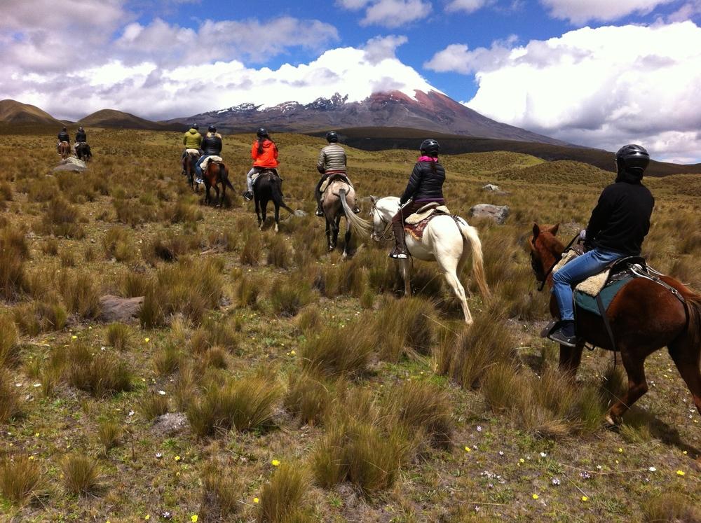"""""""Ecua Horse Rides kreeg al veel goeie recensies op TripAdvisor."""""""