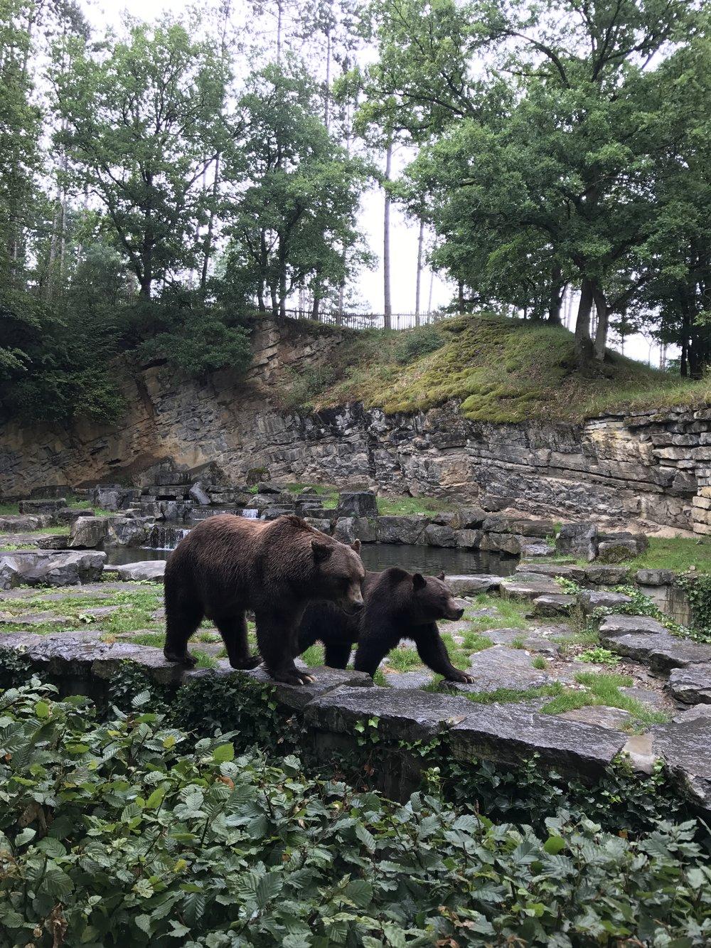 ours parc animalier han sur lesse