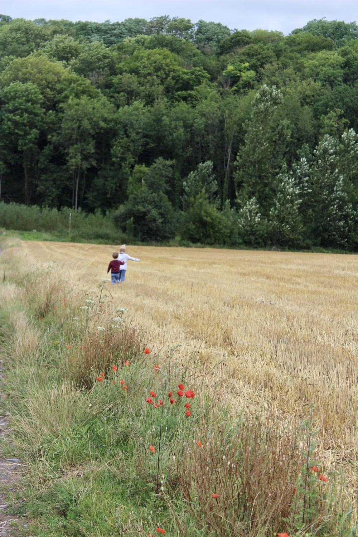 uitgestrekte velden gesves