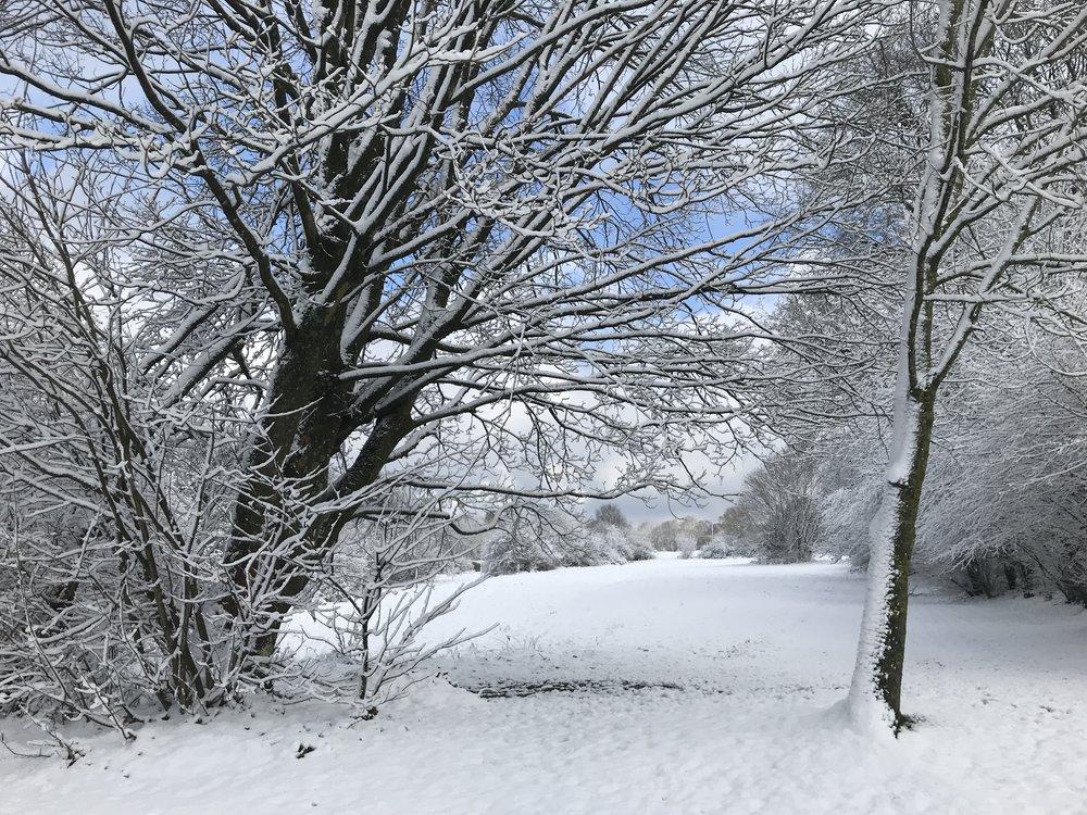 Een witte kerst vieren in de Vielsalm. Uhu, wederom in de Ardennen.