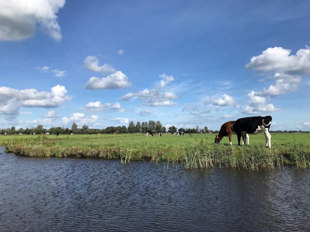 noord-holland weilanden.JPG
