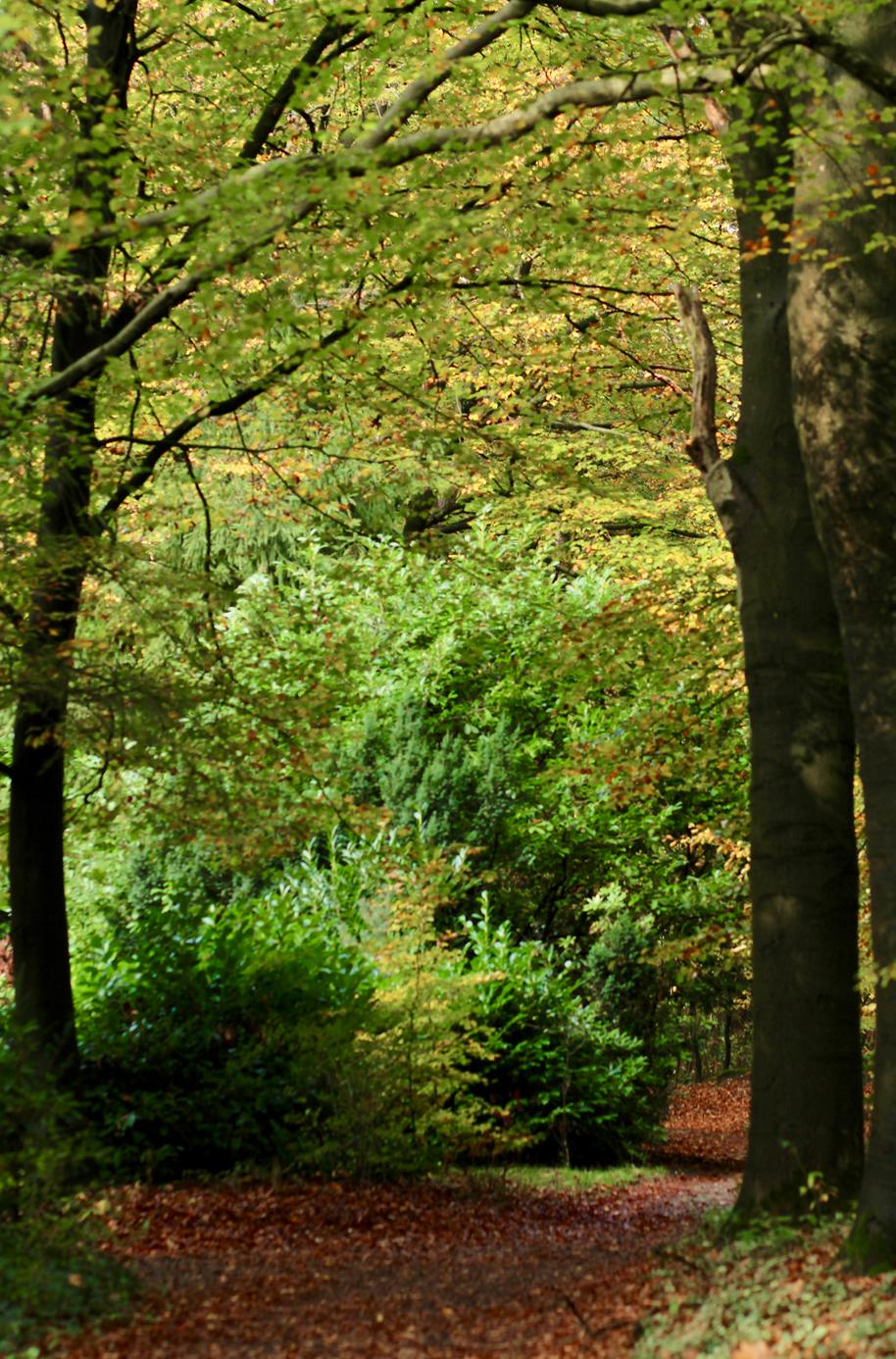 camping rcn het grote bos.png