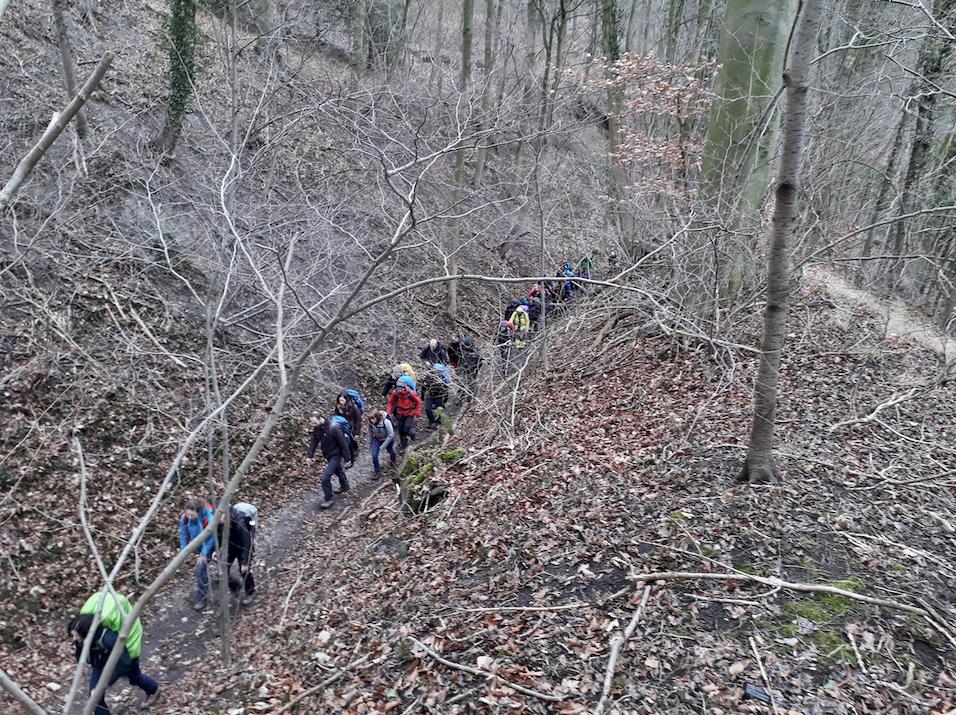wandelen door de bossen.png