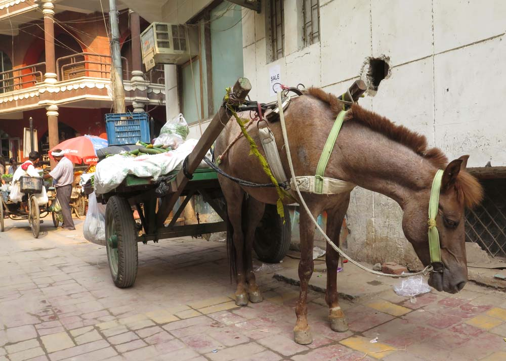 Pony cart, Hauz Khas Village, Delhi