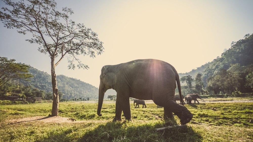 Thai-Elephants-uhd-wallpapers.jpg