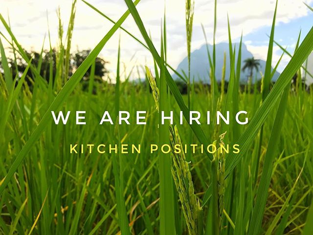 *Cooks needed*  We are looking for passionate and creative people to join our team. Please send your resume to barnnorkthai@gmail.com