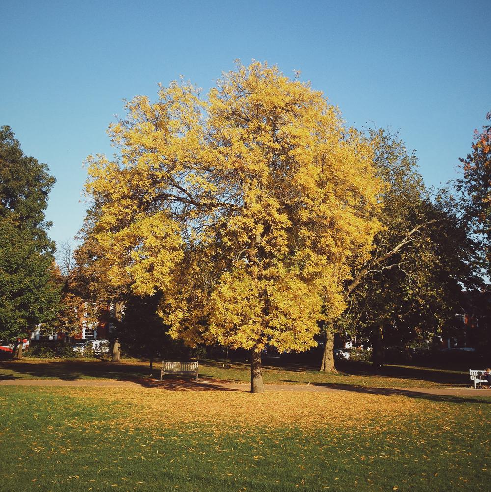 A sunny Queen's Park.