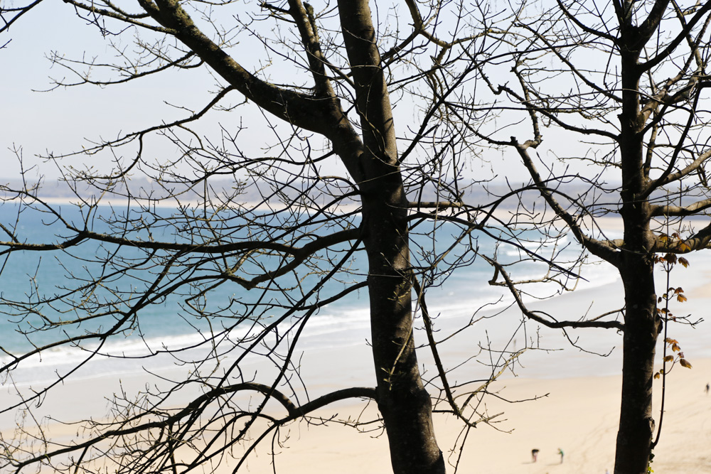 Winter Trees, Carbis