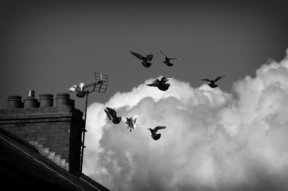 day_171_pigeons_0012.jpg
