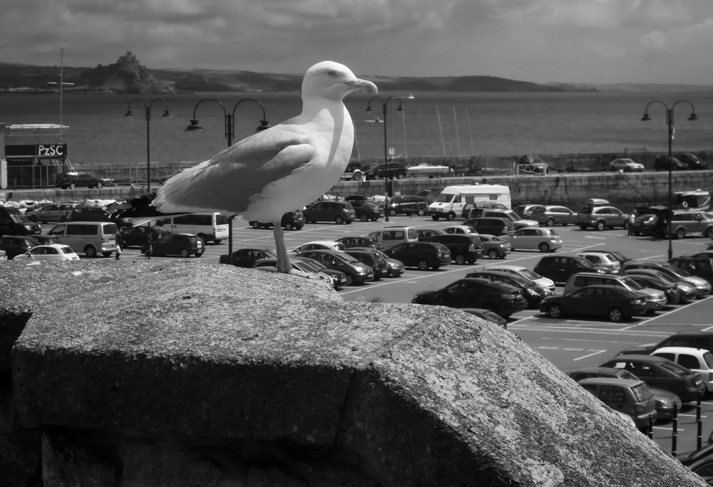 day_193_nk_penzance_gull_0003.jpg