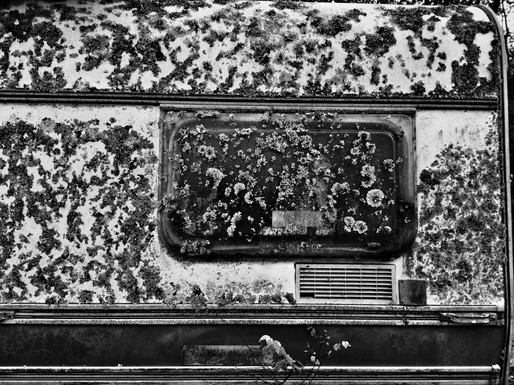 day_312_2012_iphone_day_312_lichen caravan_a.jpg