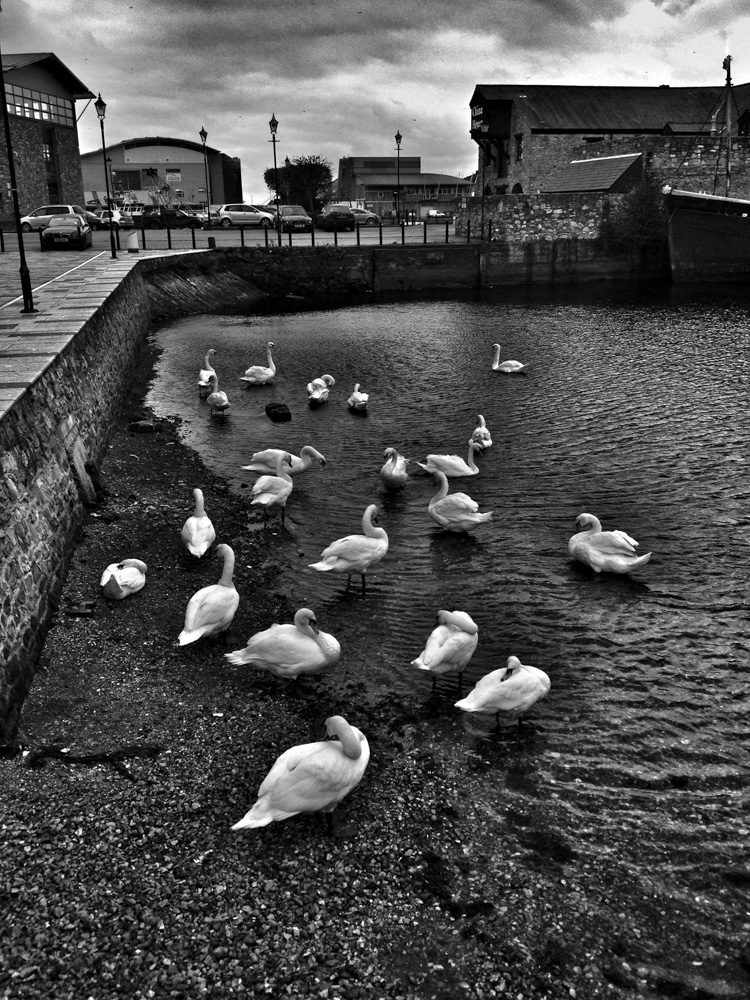 day_314_2012_iphone_day_314_swans_plymouth.jpg