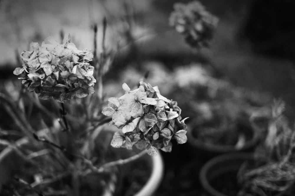day_042_home_garden_0010.jpg