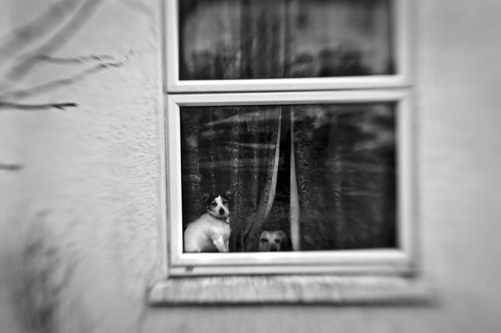 day_057_helston_0092a.jpg