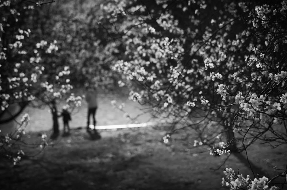 day_056_blossom_0005.jpg