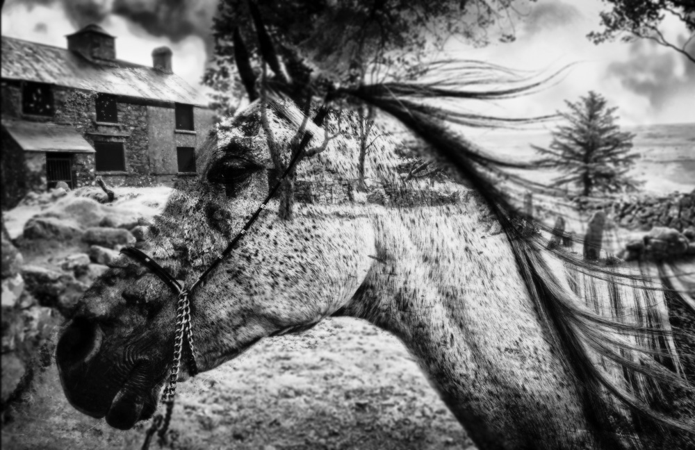day_248_Warhorse.jpg