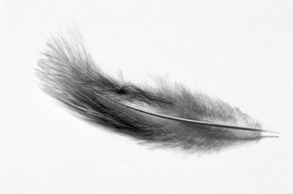 day_254_px_2012_feather_005 (1).jpg