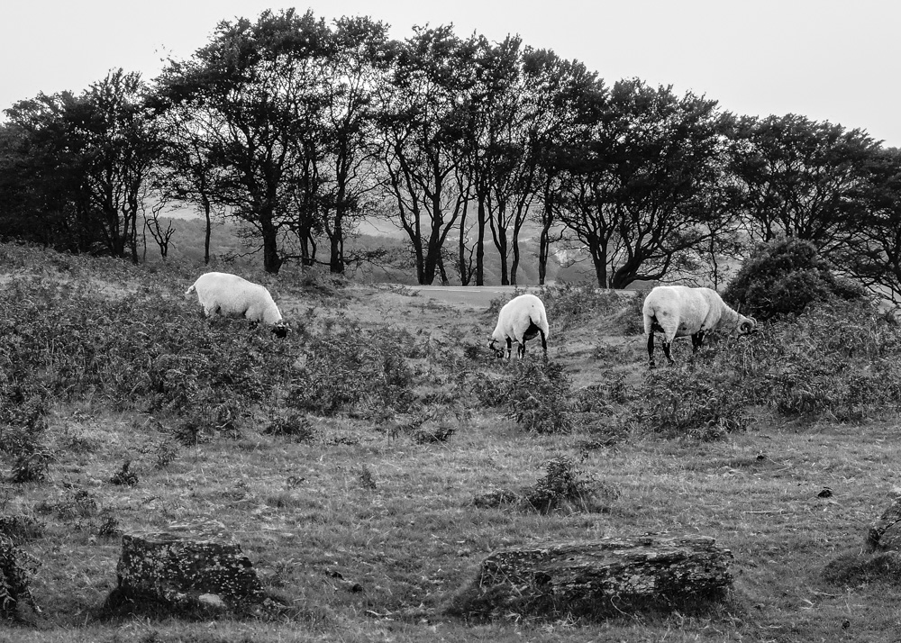 day_258_nk_devon_dartmoor_0172.jpg