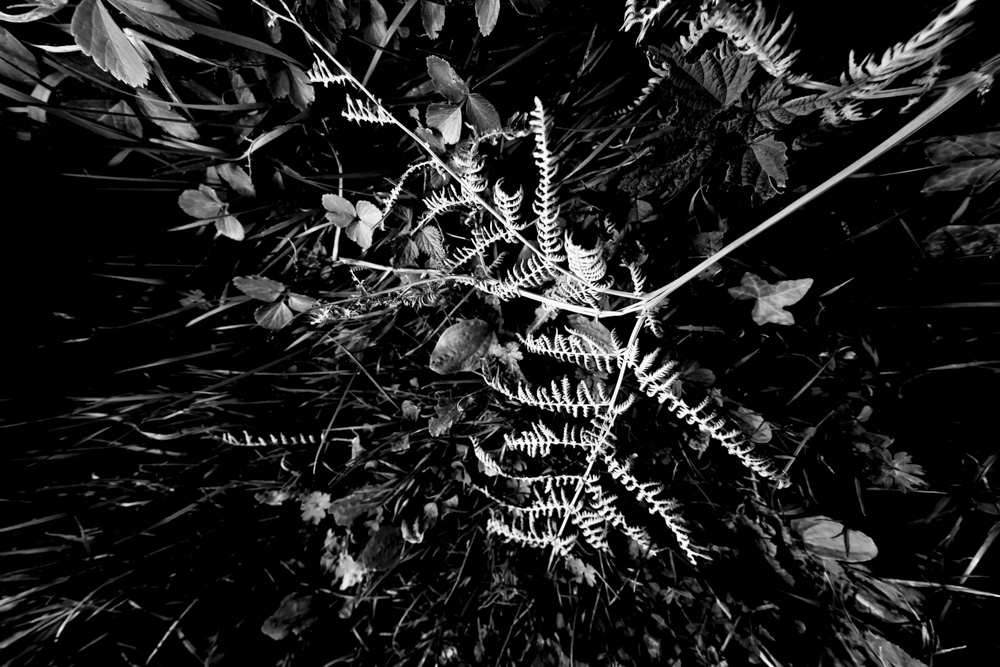 Coast Plants Fading VIII