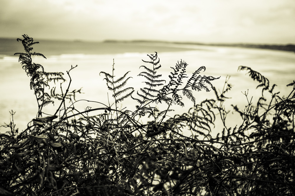 Coast Plants Fading X