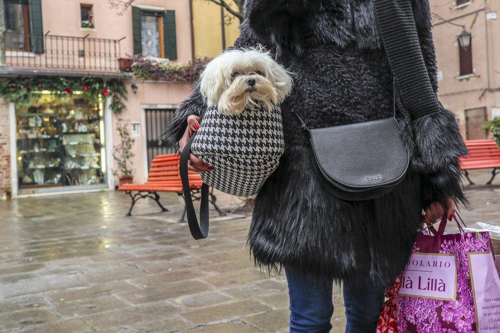 Venetian Dogs