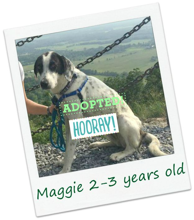 Maggie_adopted.jpg