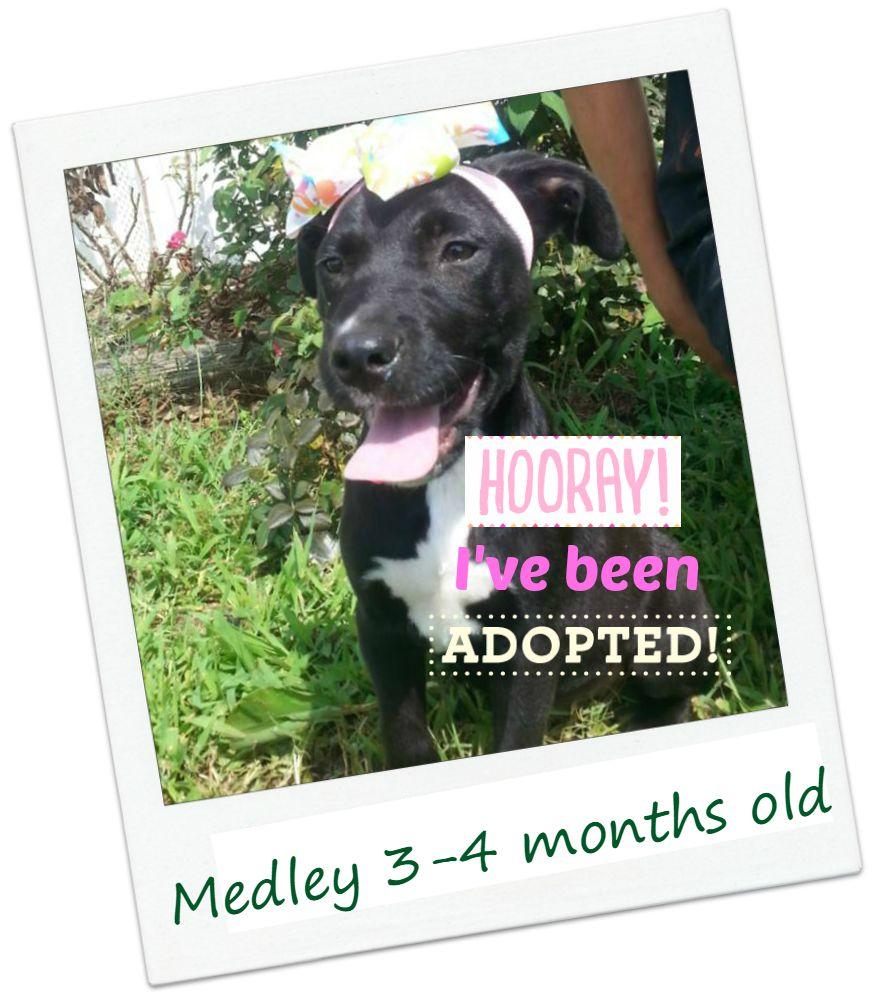 Medley_adopted.jpg