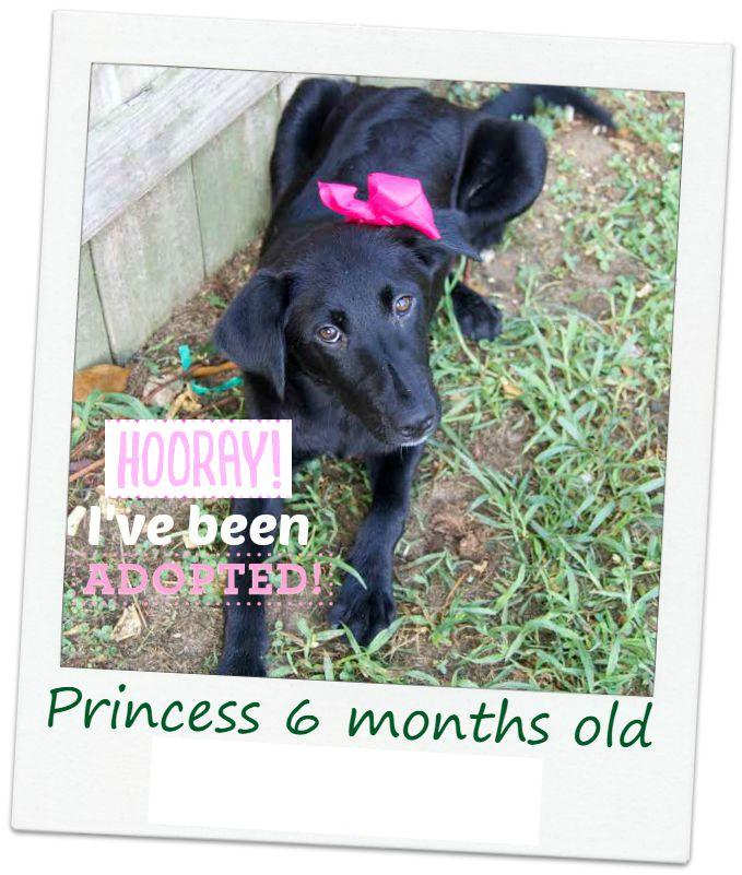 Princess_adopt.jpg