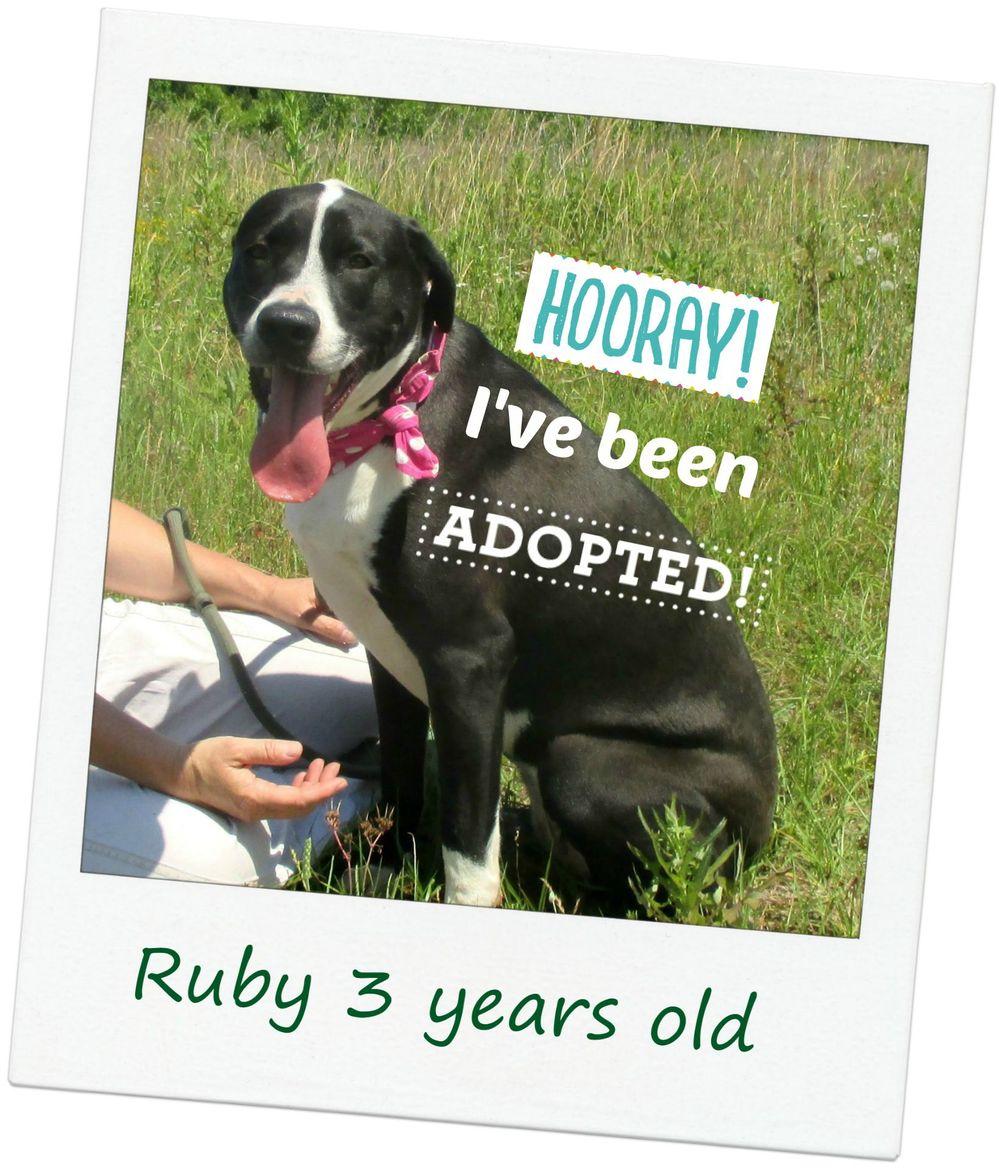 Ruby_adopted.jpg