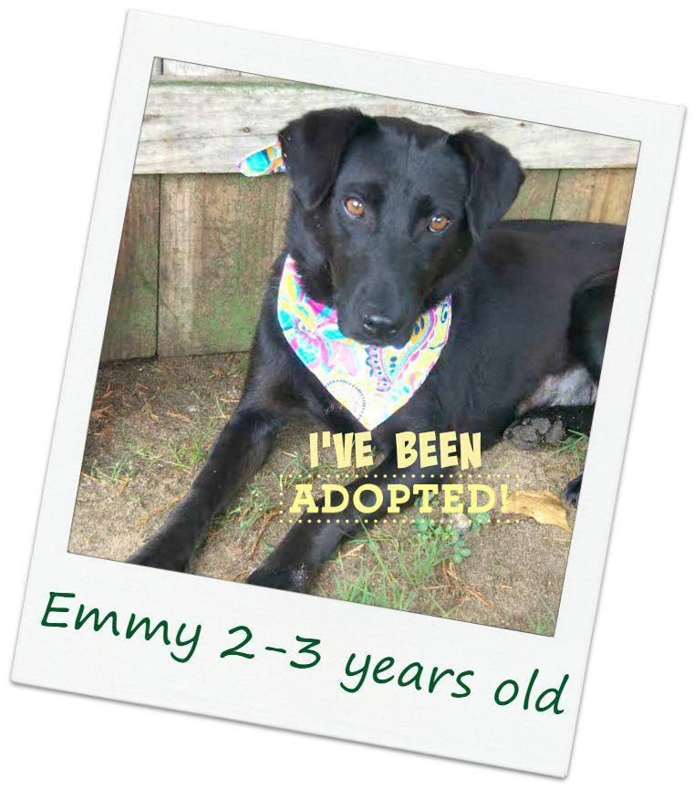 Emmy_adopted.jpg