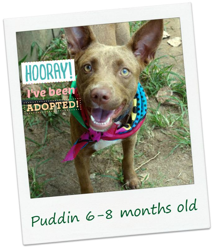 puddin_adopt.jpg
