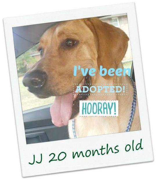 JJ_adopt.jpg