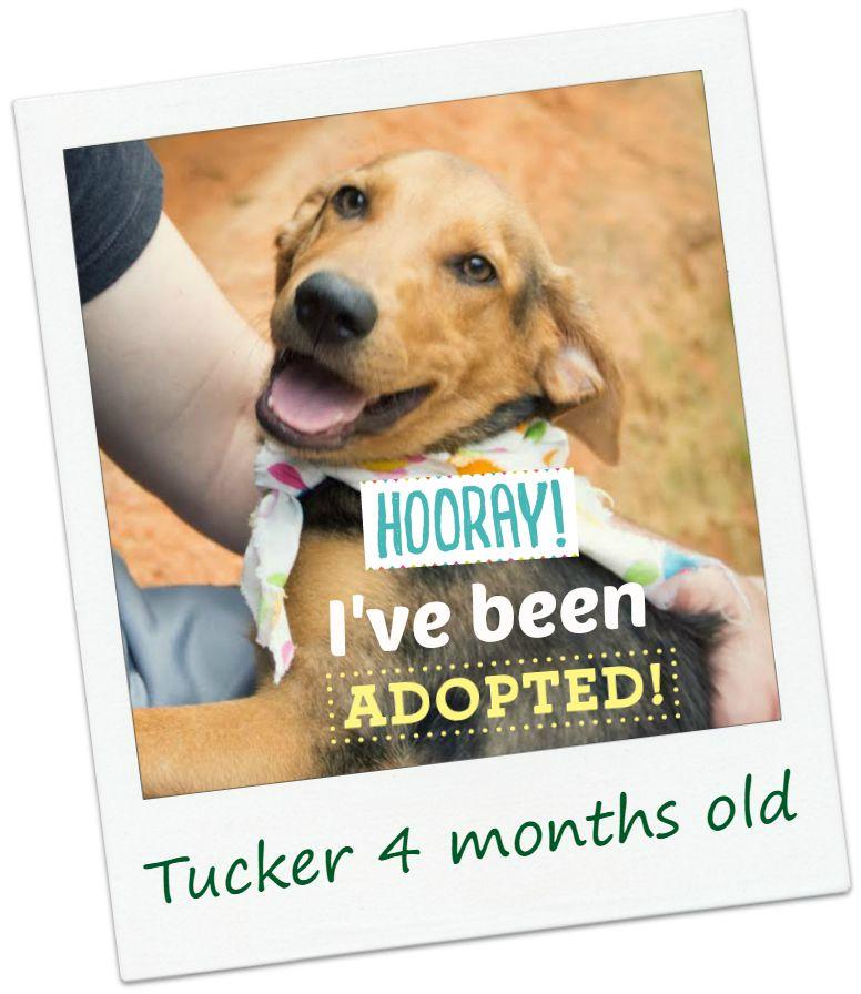 tucker_adopt.jpg