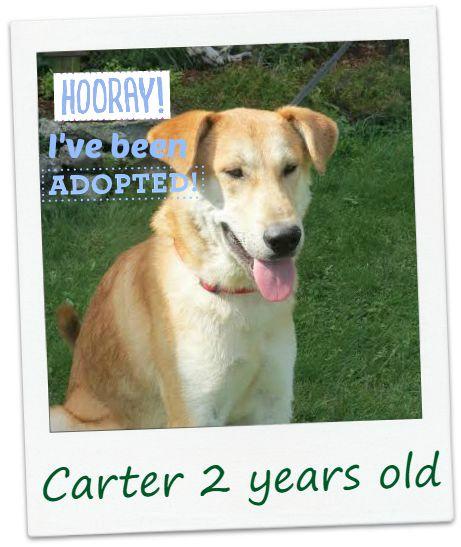 Carter_adopt.jpg